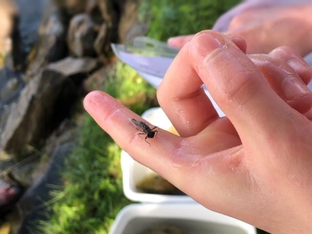 Benthic Macroinvertebrates – Water Quality Indicators