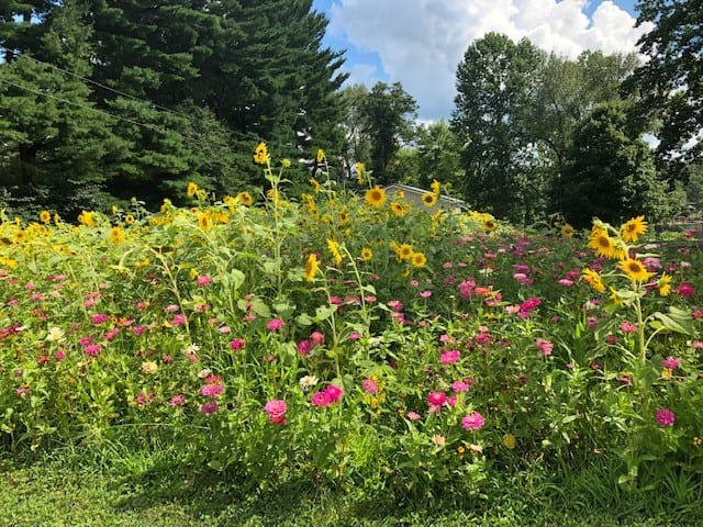 Lawn to Meadow – Part I